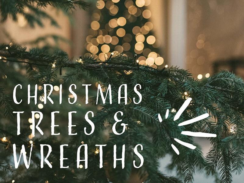 Christmas Trees & Wreaths